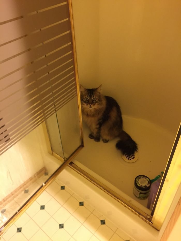 Monk Is A Maine Coon Cat Who Loves To Play With Water. Or In Showers.