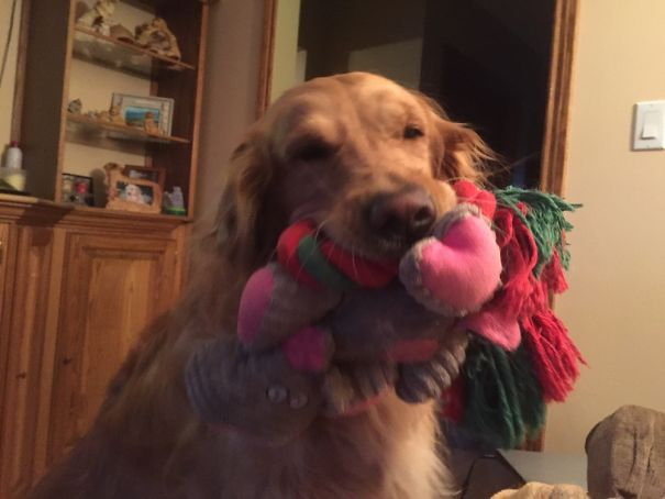 My Mom's Dog Has To Show You All Of Her Toys As Soon As You Get There.
