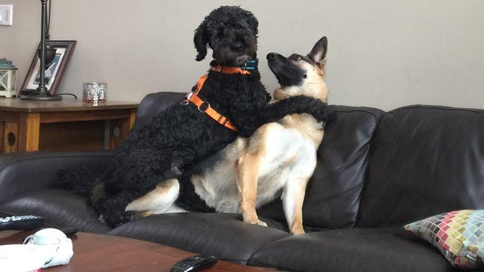 Finn (l) Loves His Girl Calypso