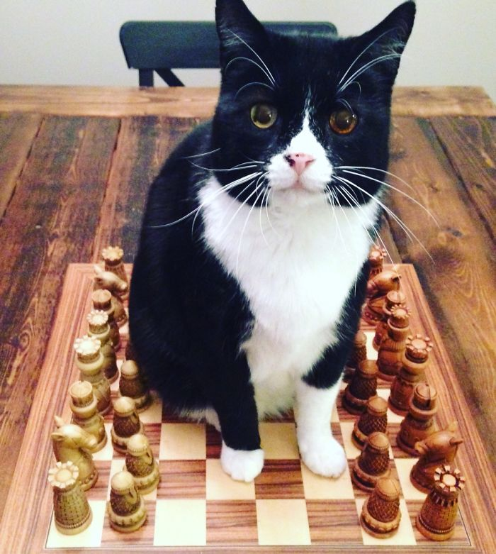 Who's Up For A Game?