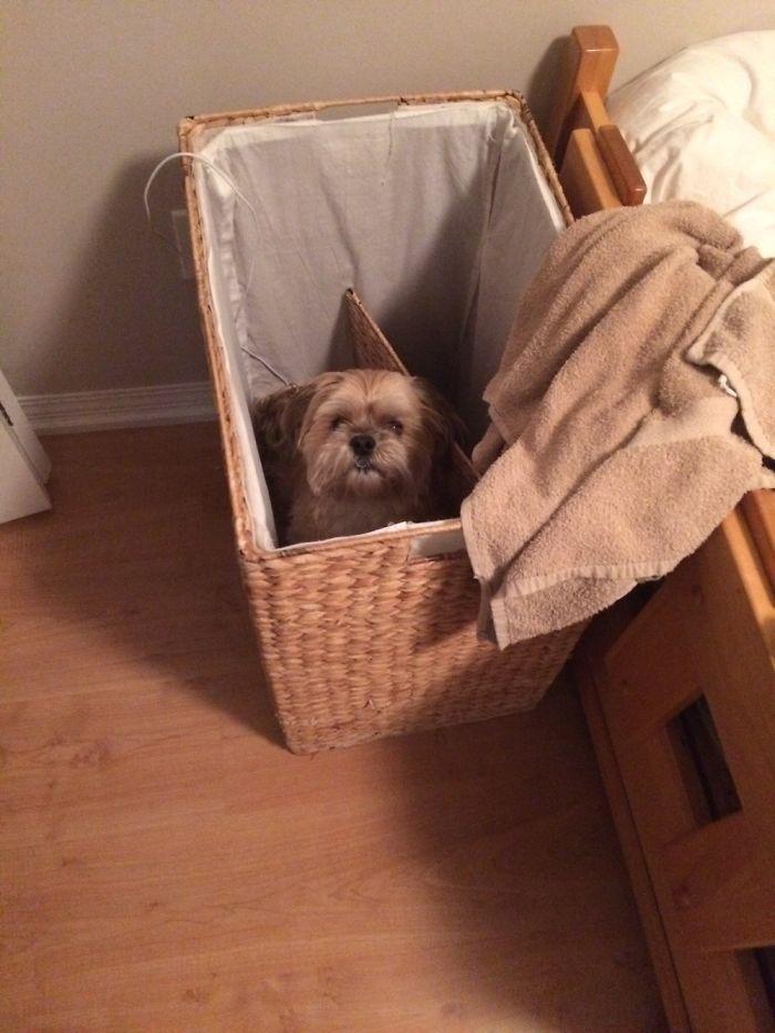 I Heard Scratching And Found My Dog Stuck In The Hamper..