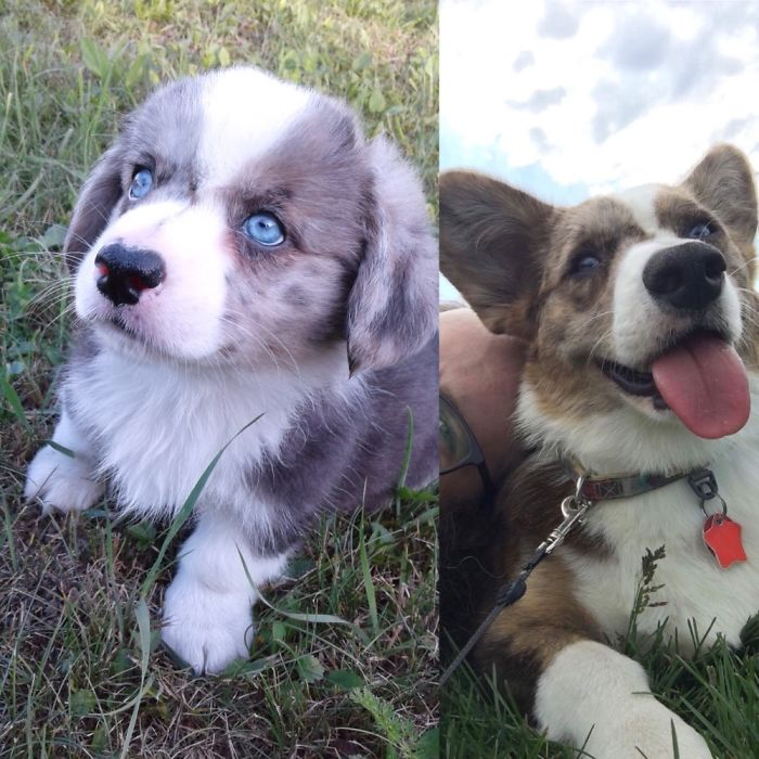 8 Weeks Vs 11 Months. My Pupper Is Always My Baby.