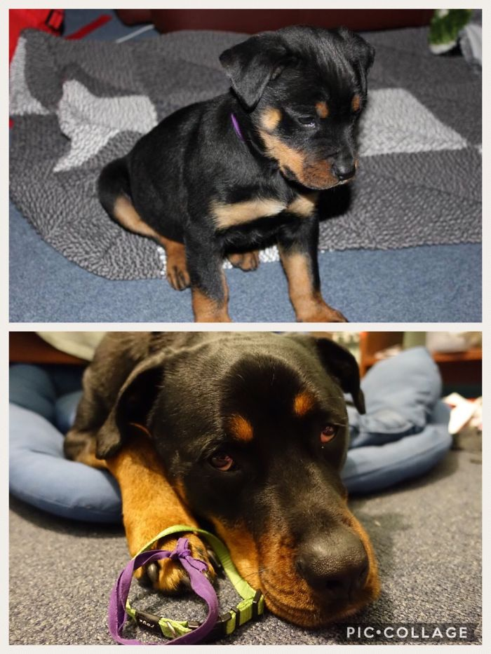 Collars – Then And Now! You Can Just See The Purple One Around His Neck In The Top Pic ☺️