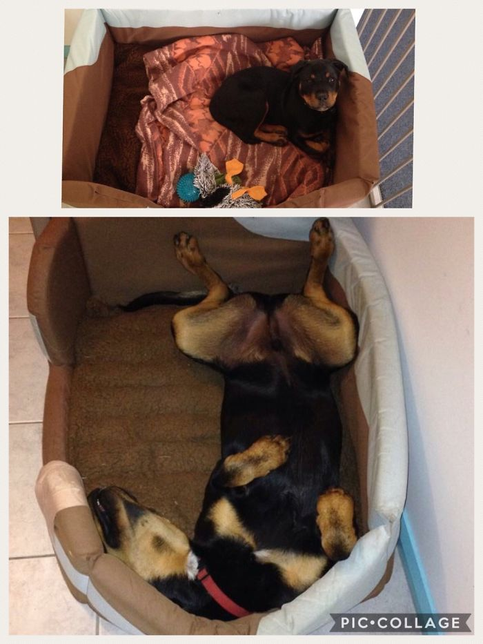 Big Boy Bed – What A Difference Six Months Made!