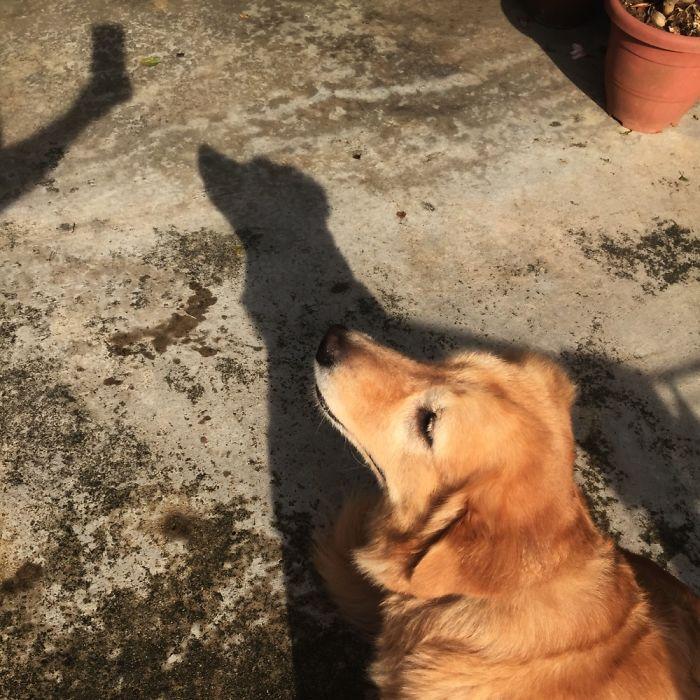 My Shadow Love Selfie