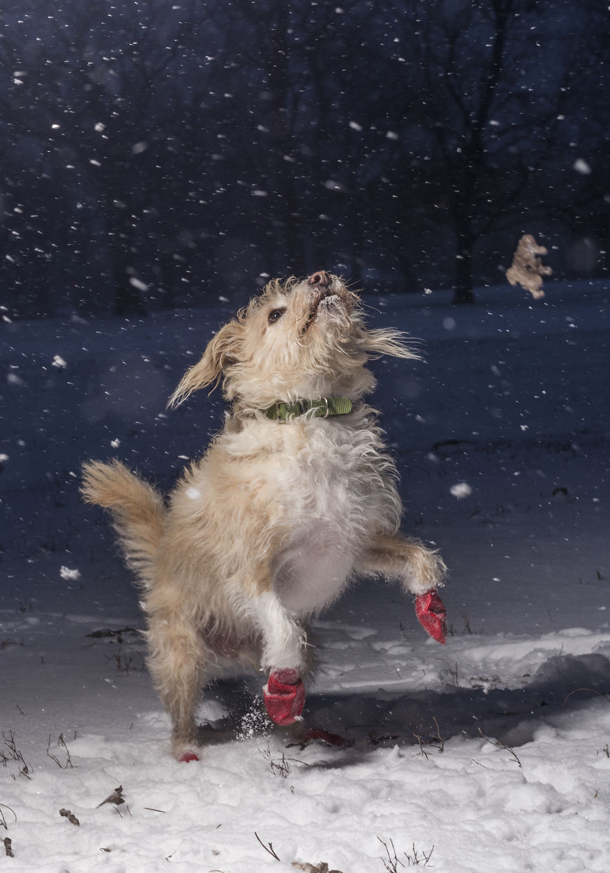I Love Dogs Because… (ages 11 To 17) 1st Place Winner Julian Gottfried, USA