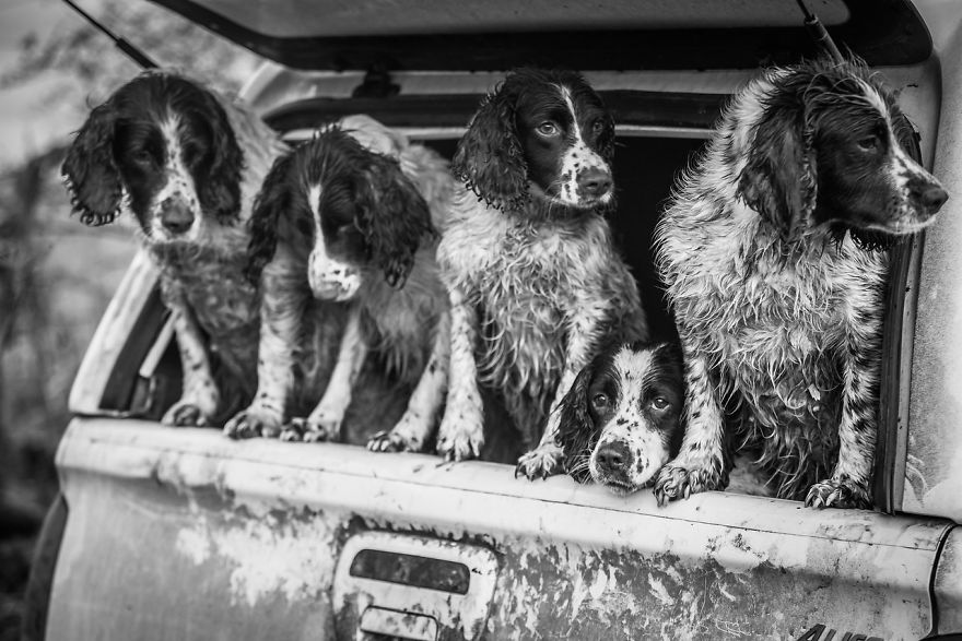 Dogs At Work 2nd Place Winner Lucy Charman, UK