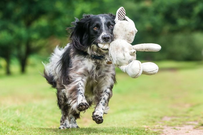 Dogs At Play Category 3rd Place Winner Will Holdcroft, UK