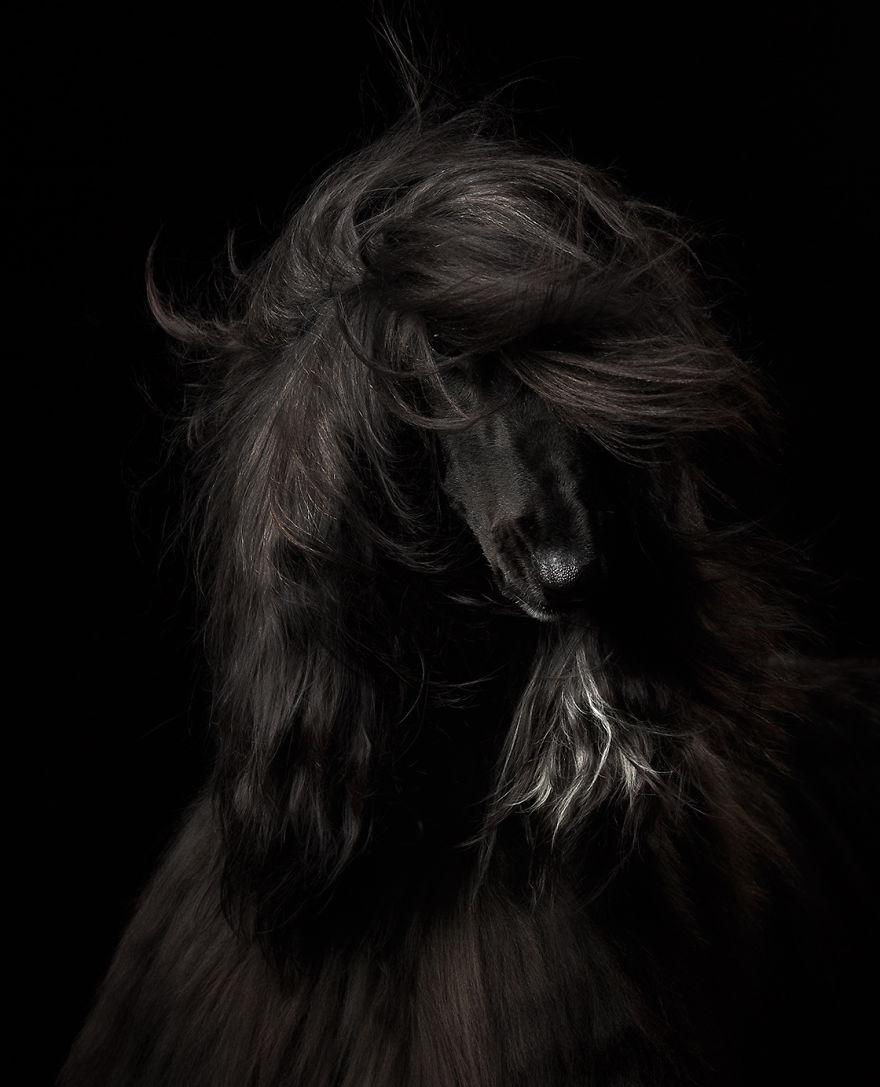 Dog Portrait 1st Place Winner, Anastasia Vetkovskaya, Russia