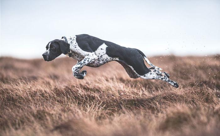 Dogs At Work 1st Place Winner Sarah Caldecott, UK