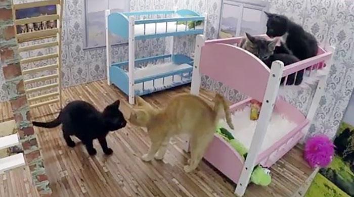 kittens-dollhouse-keeping-up-with-the-kattarshians-14jpg