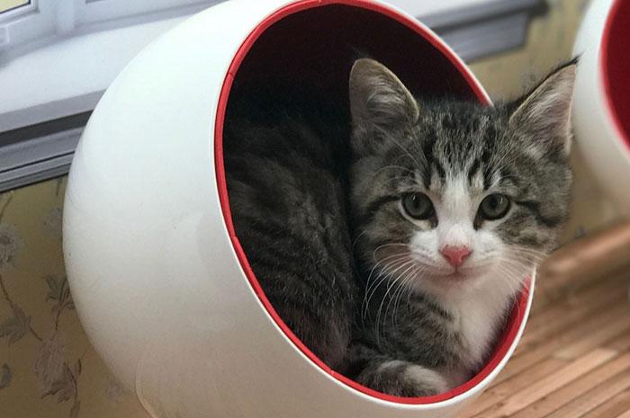 kittens-dollhouse-keeping-up-with-the-kattarshians-5