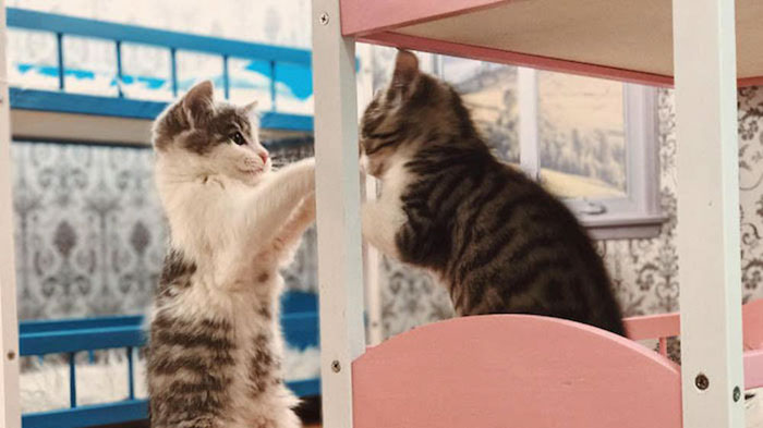 kittens-dollhouse-keeping-up-with-the-kattarshians-6