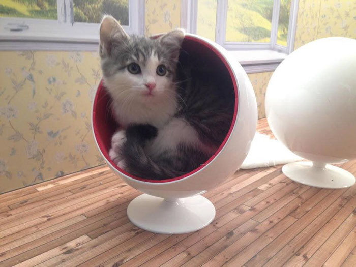 kittens-dollhouse-keeping-up-with-the-kattarshians-9