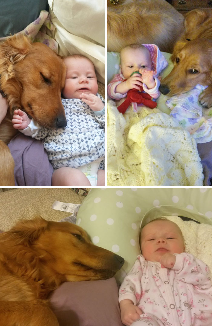 I'm Starting To Think That My Dog Thinks That My Baby Is Actually Her Baby