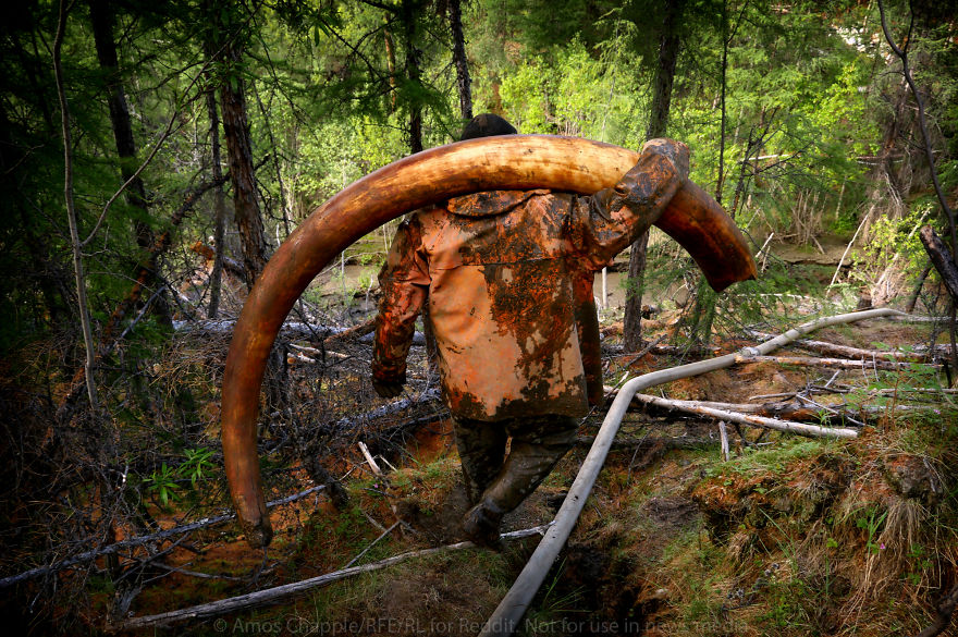 Photographer Joins Illegal Mammoth Tusk Hunt In Siberia, Captures