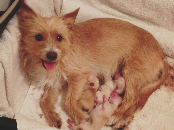 puppies thrown from car window get adopted by a dog mamma