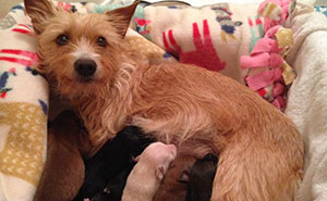 Puppies Thrown From Car Window Get Adopted By A Dog Mamma Who Just Lost Her Own Children