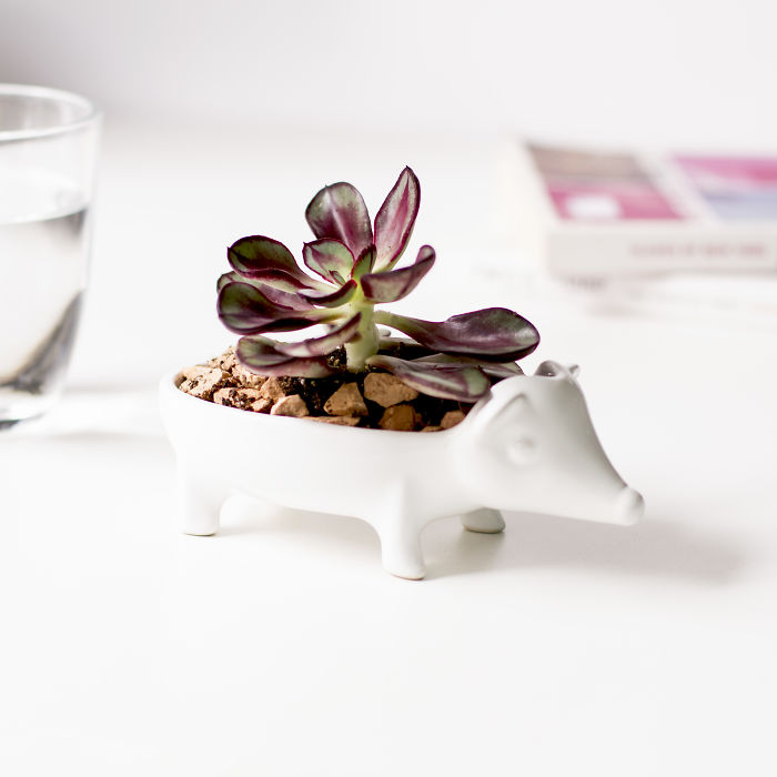 Keep Your Succulents Looking Sharp With This Adorable Hedgehog Planter