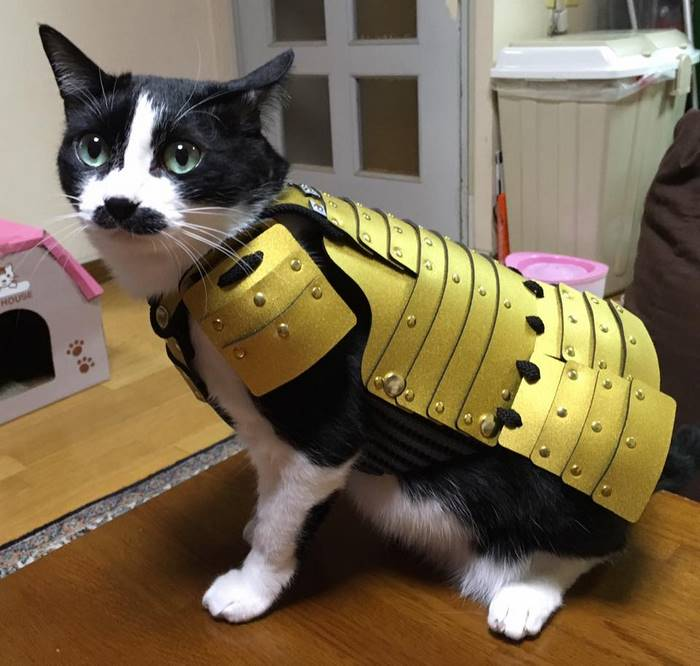 pet-dog-cat-armor-samurai-age-japan-5