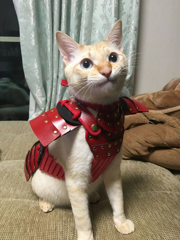 This Japanese Company Makes Samurai Armor For Cats And