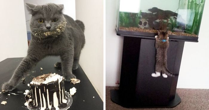 Times Pets Were Caught RedHanded Bored Panda - 23 hilarious photos of pets caught red handed