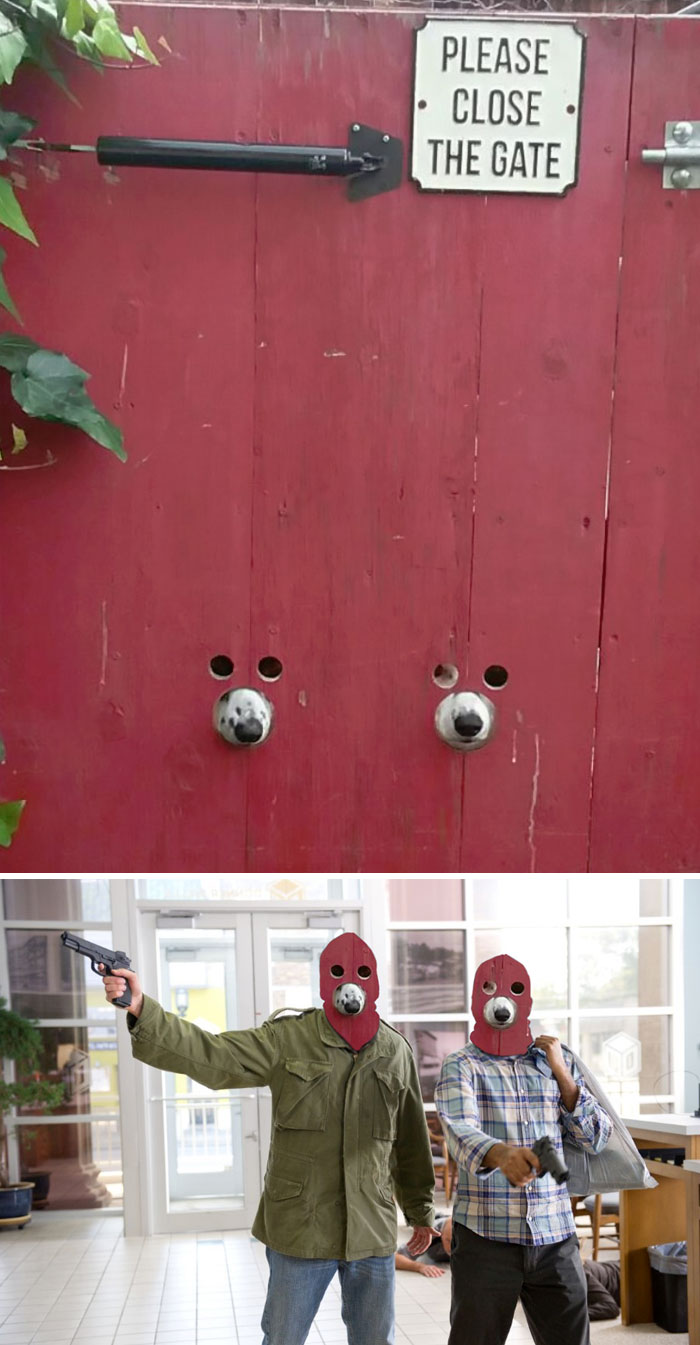 This Dog-Friendly Gate