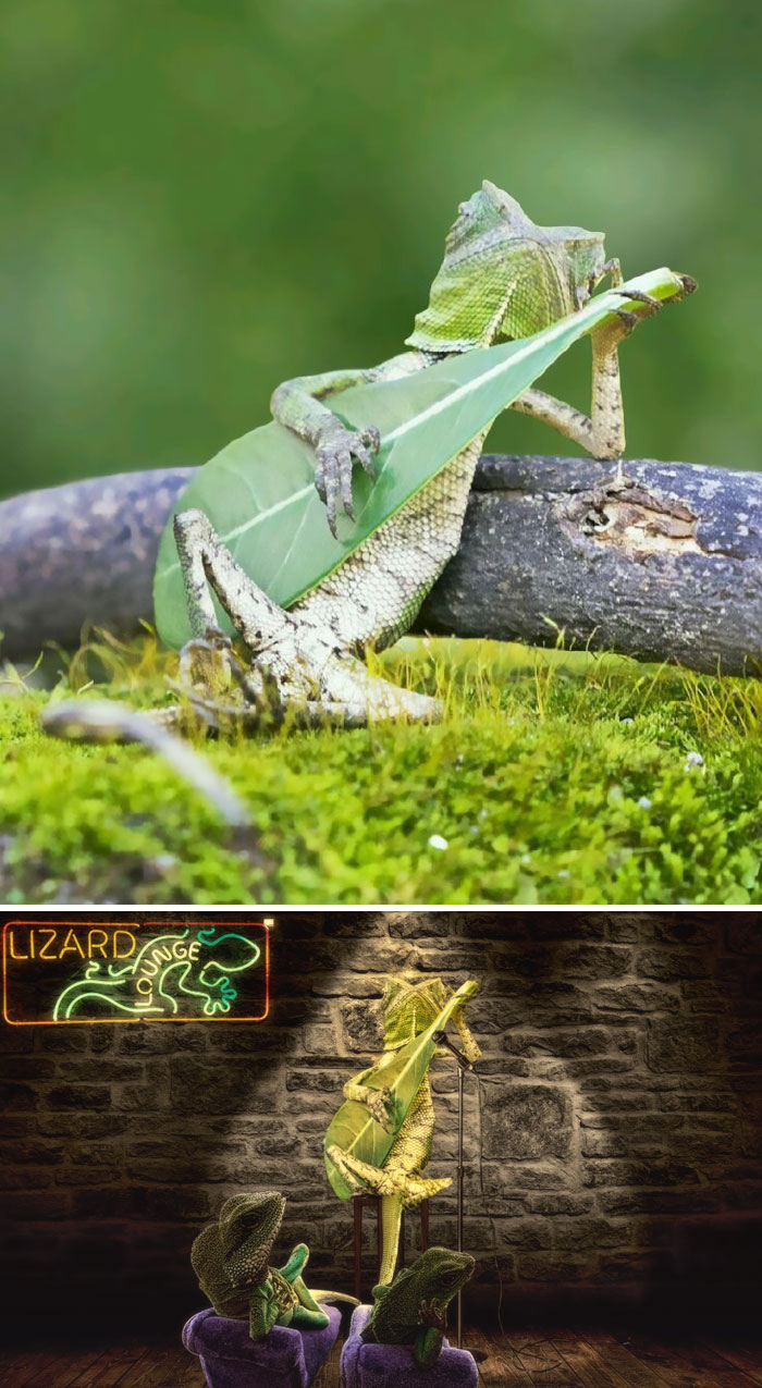 This Gecko Strumming A Leaf