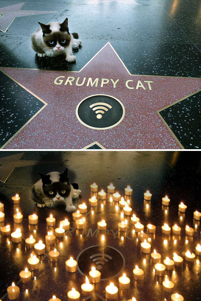 Grumpy Cat's Walk Of Fame Star Photoshop Battle