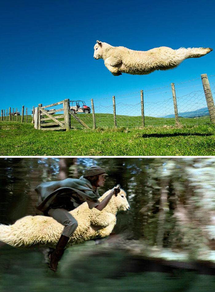 Speeder Sheep