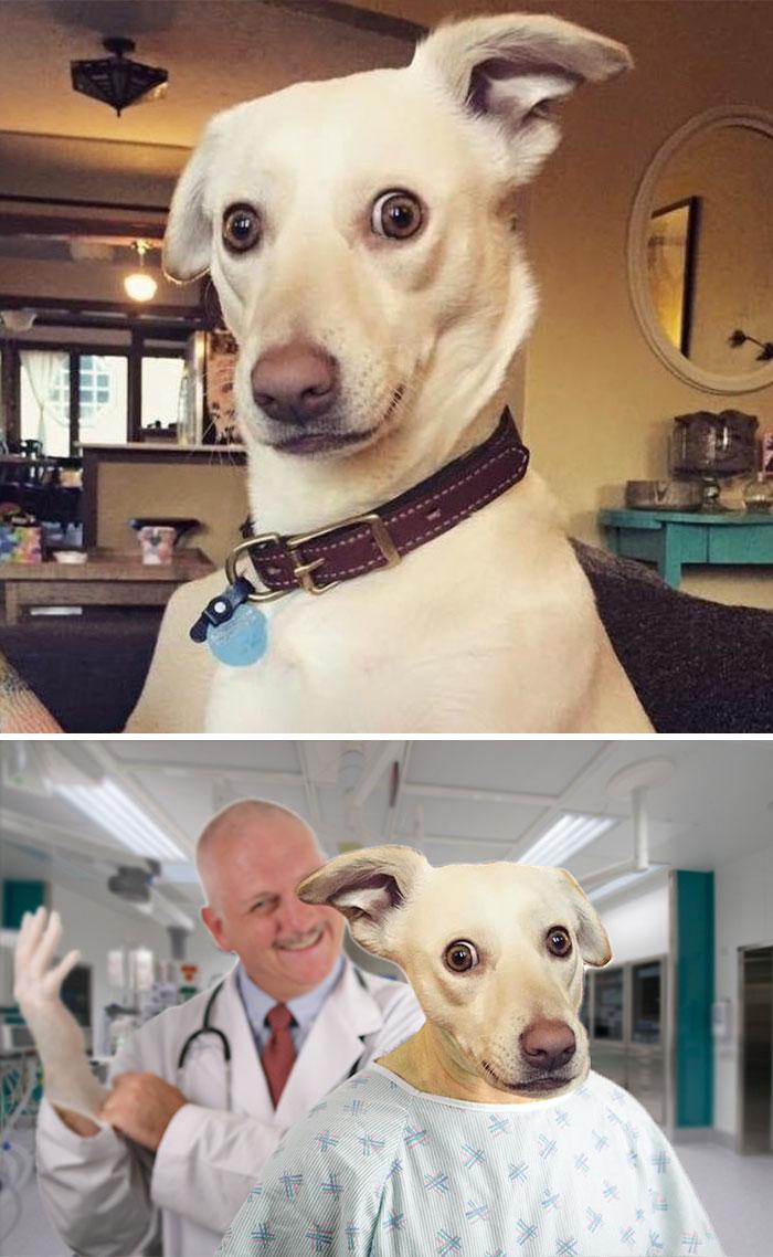 Trust Me, I'm A Dogtor...