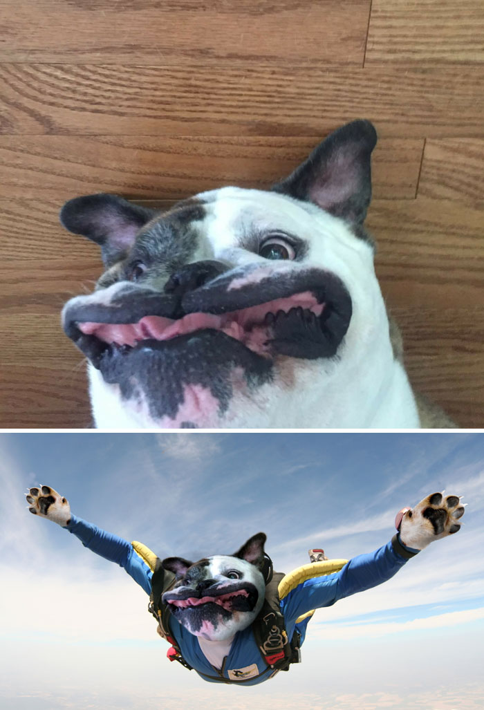 This Dog Making A Ridiculous Face
