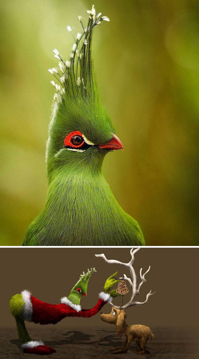 A Bird With Wacky Hair