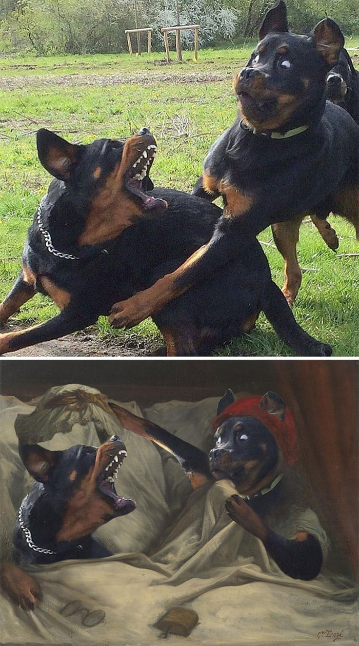 Dog Regrets Playing With His Big Brother