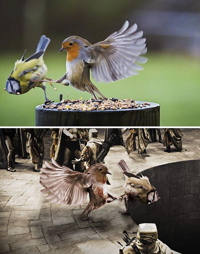 Batalla de pájaros
