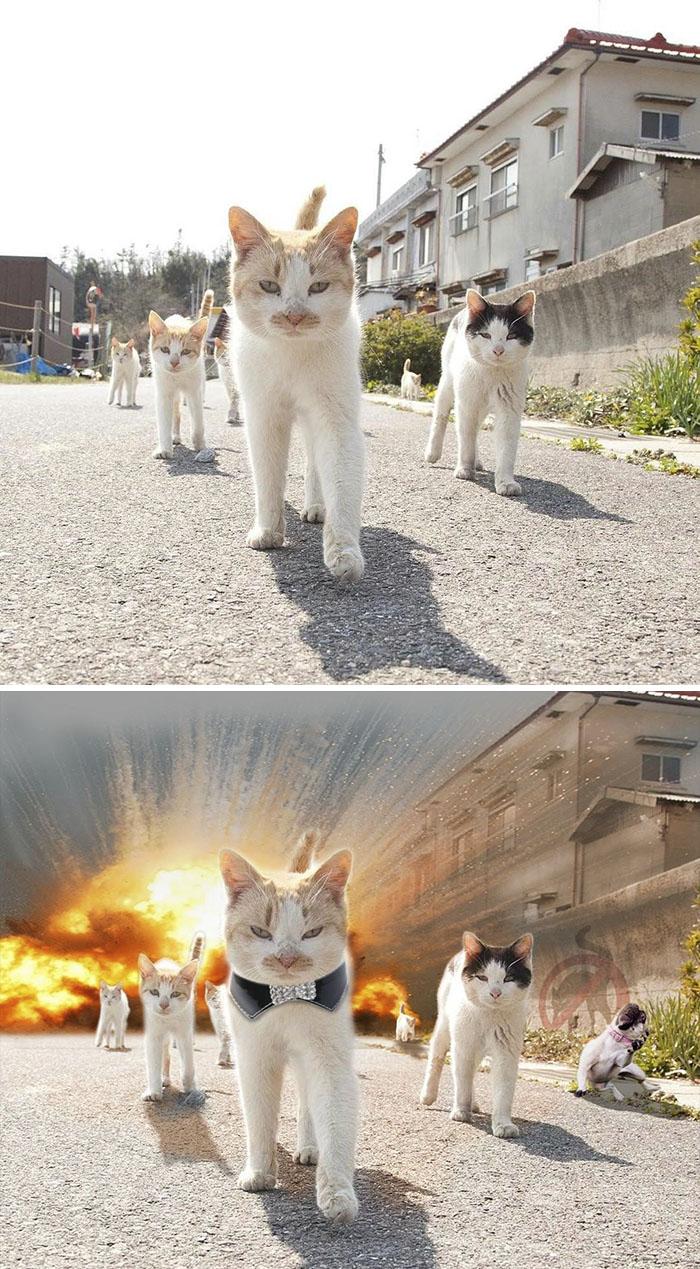 Cats Walking In Japanese Neighbourhood