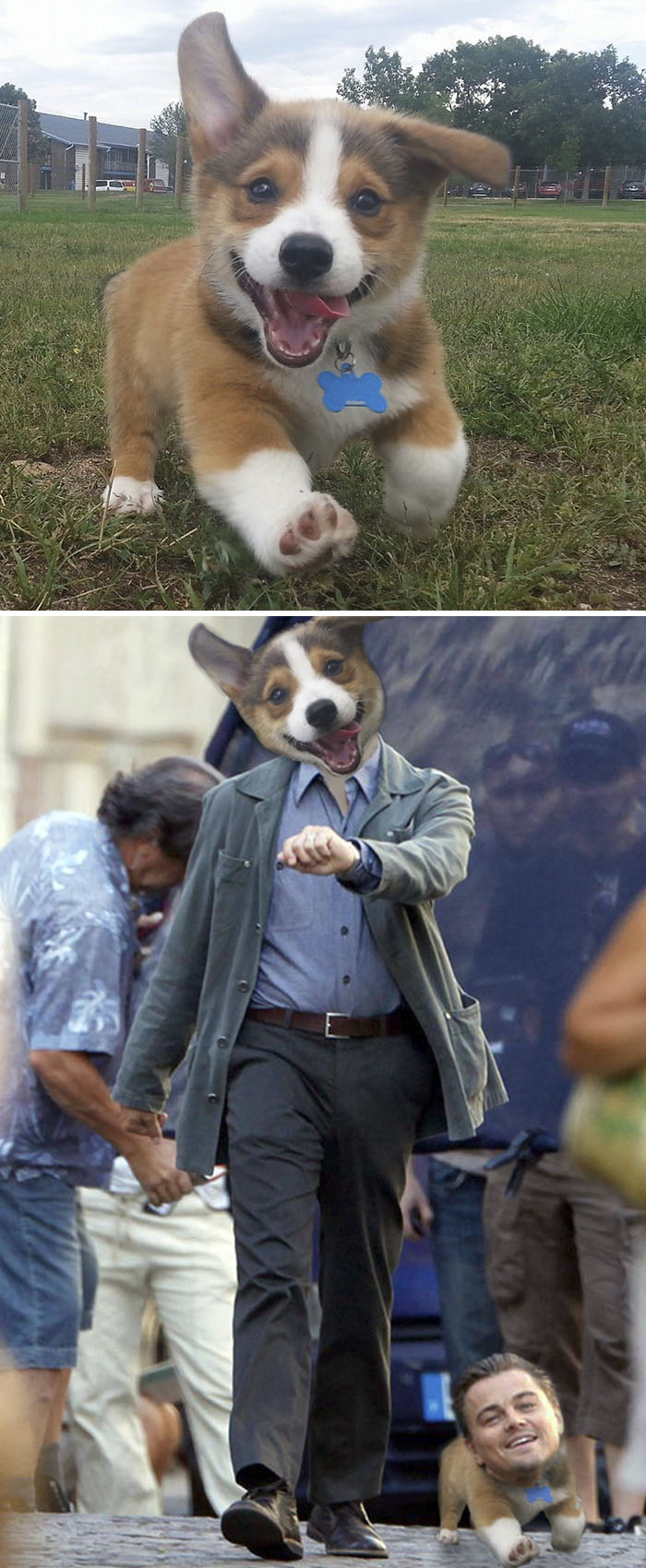 Happy Puppy Running