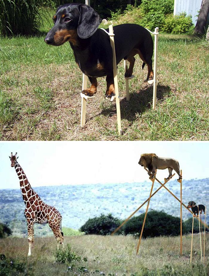 A Dog On A Stilts