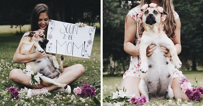 This Pregnant Dog Just Had A Maternity Photoshoot, And People Just Can't Handle It