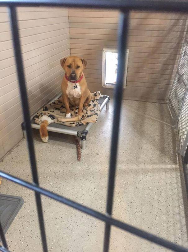 sad-shelter-dog-no-one-adopts-bear-10