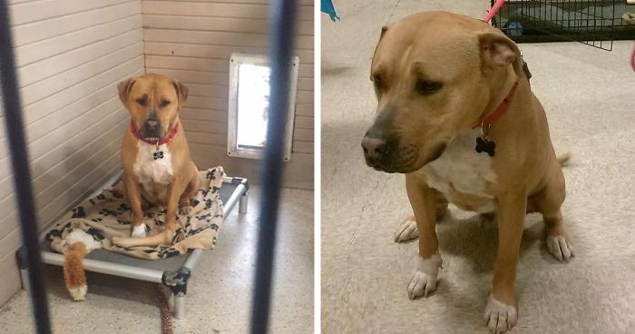 No One Wants To Adopt This Dog, And Shelter Staff Just Can't Figure Out Why