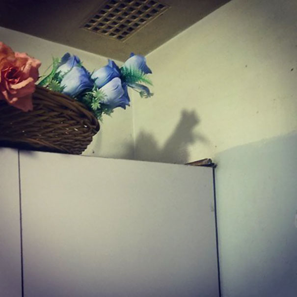 These Flowers At My Parent's Place Cast A Squirrel Shadow