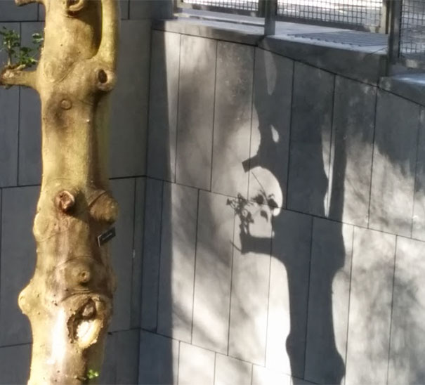 Found This Skull While Walking Through Campus Today
