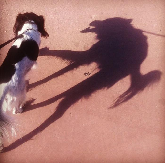 Perro con sombra terrorífica