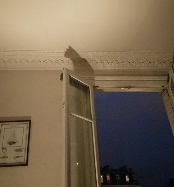 La sombra de mi ventana es un gato