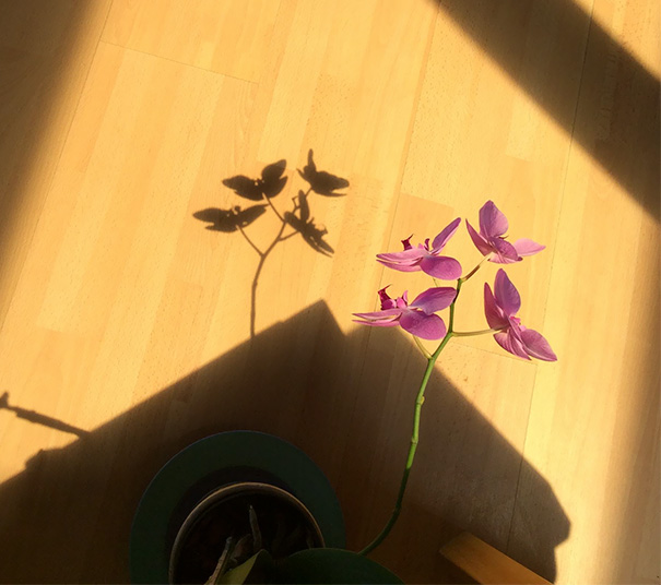 The Shadow Of My Orchid Looks Like Butterflies Flying Away