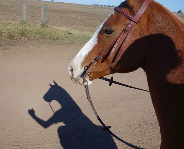 Taking A Photo Of This Horse Made Its Shadow Look Like A Boxing Kangaroo