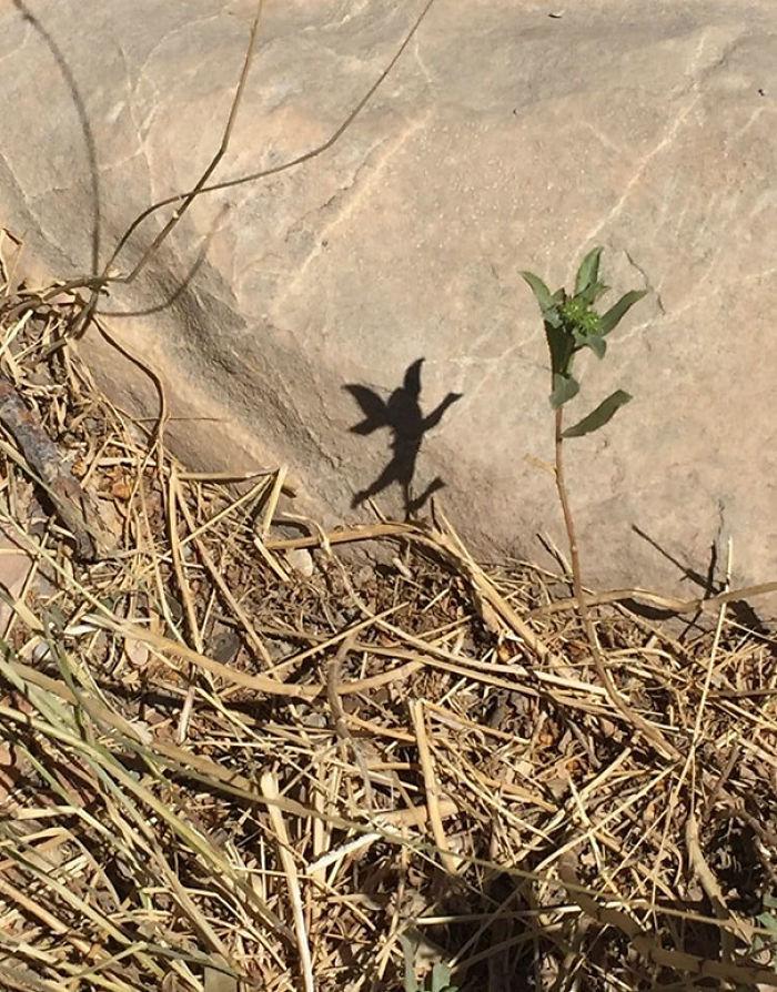 La sombra de esta planta parece un hada danzarina