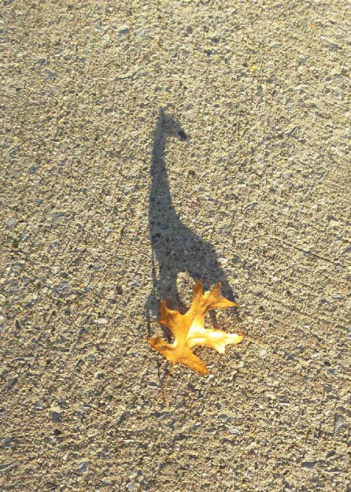 Sombra de jirafa