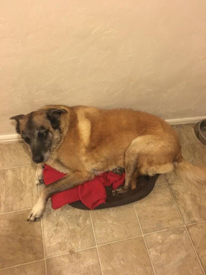 75 Pound Dog In A 15 Pound Dog Bed